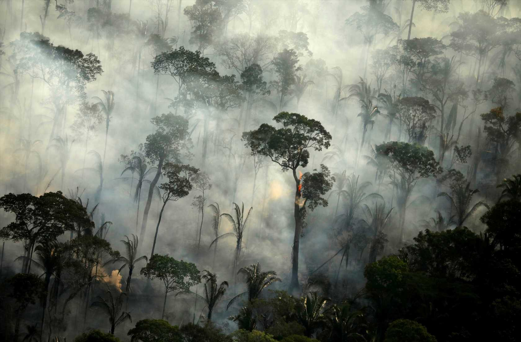 Amazon rainforest is nearly 'full' of greenhouse gases – and could start POLLUTING Earth in next 15 years