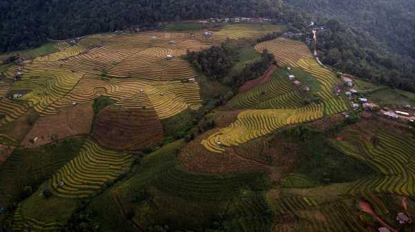 Extreme Weather Events Expose Vulnerability of Crops Globally