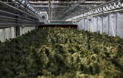 Global Meltdown Hits an Industry on the Brink: Cannabis Weekly