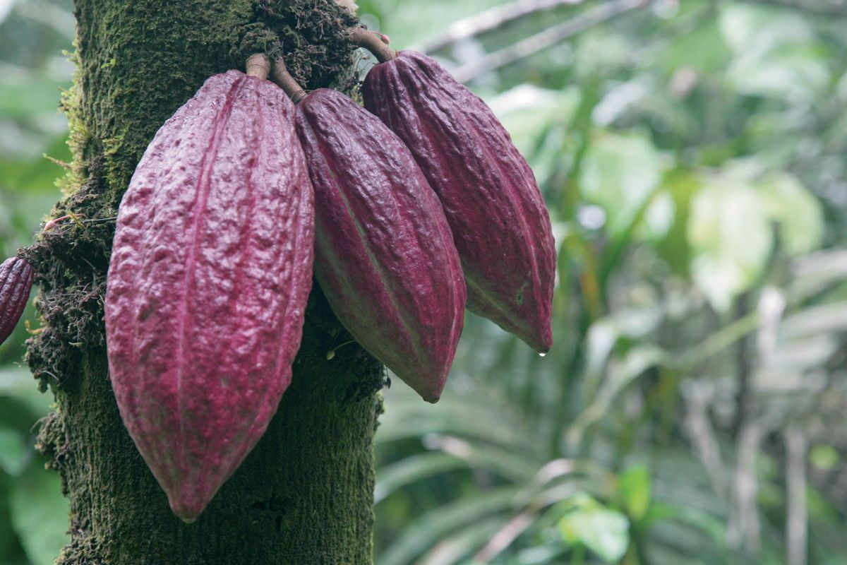 We Tested 'WholeFruit,' the Next Big Thing in Chocolate