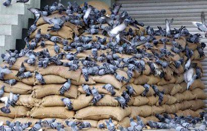 Coronavirus: Essential goods market faces labour shortage