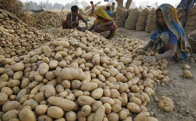Potato prices jump by 25% due to crop damage, rains
