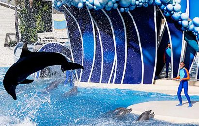 SeaWorld CEO throws in towel just five months into job