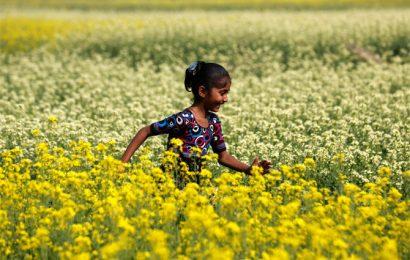 Rabi procurement starts slowly across North India