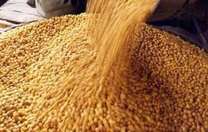 How chana saved govt's plan to distribute free pulses