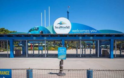 SeaWorld Gets Zoo Designation to Reopen Before California Rivals