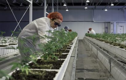 Aurora Cannabis, other pot stocks surge as marijuana legalization spreads in the US