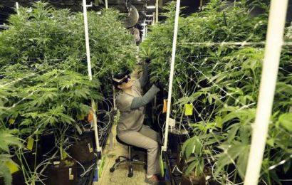 New Jersey Voters Approve Legalizing Recreational Marijuana Use