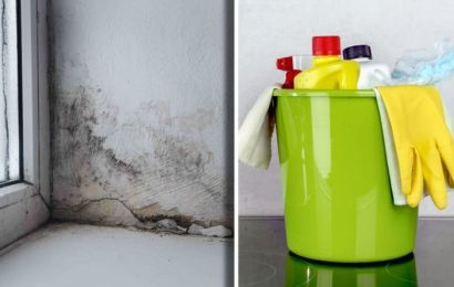 How to get rid of mould – four easy tips