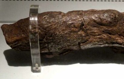 Biggest POO on record is from parasite-riddled Viking who invaded England 1,200 years ago