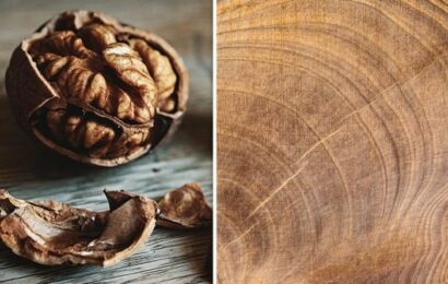 How to get rid of scratches on your wooden furniture – using a WALNUT