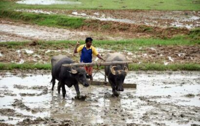 Outlook for kharif crop brightens with monsoon's revival