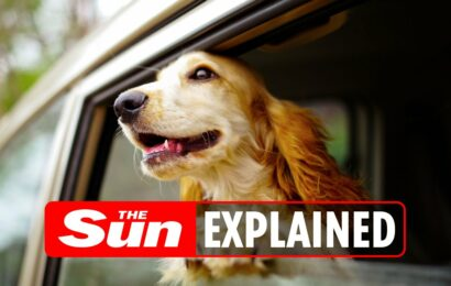 Can I be fined for letting my dog hang out of my car window?