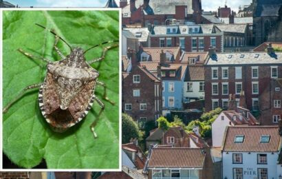 How to get rid of stink bugs as hundreds descend on UK – the five easy steps