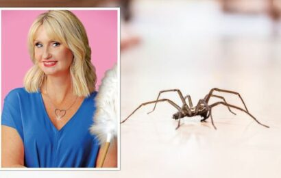 'It really does work!' Lynsey Crombie shares tips to oust spiders and moths from homes