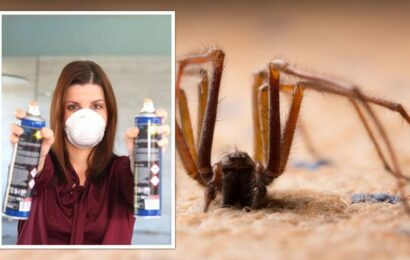 Autumn pest season: The four home and garden pests to watch out for – including spiders